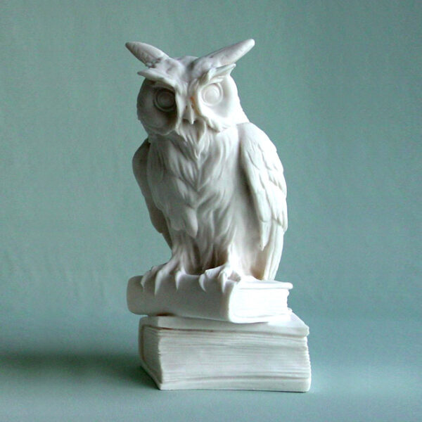 Owl standing on books in White color